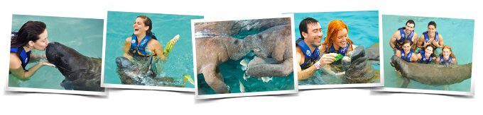 Swimming with Manatee Interactive Program